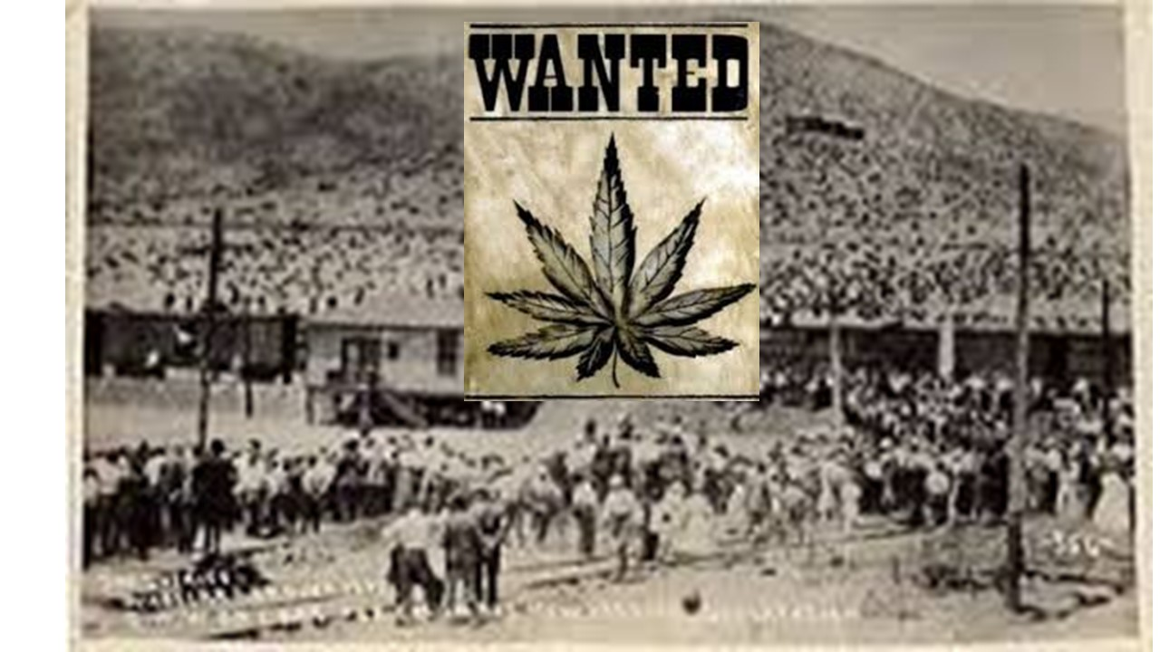 El Paso, Texas wanted an excuse to search, detain and deport Mexican immigrants. That excuse become the newly outlawed marijuana.