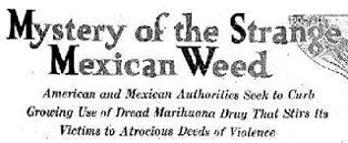 MysteryofMexiWeed.png