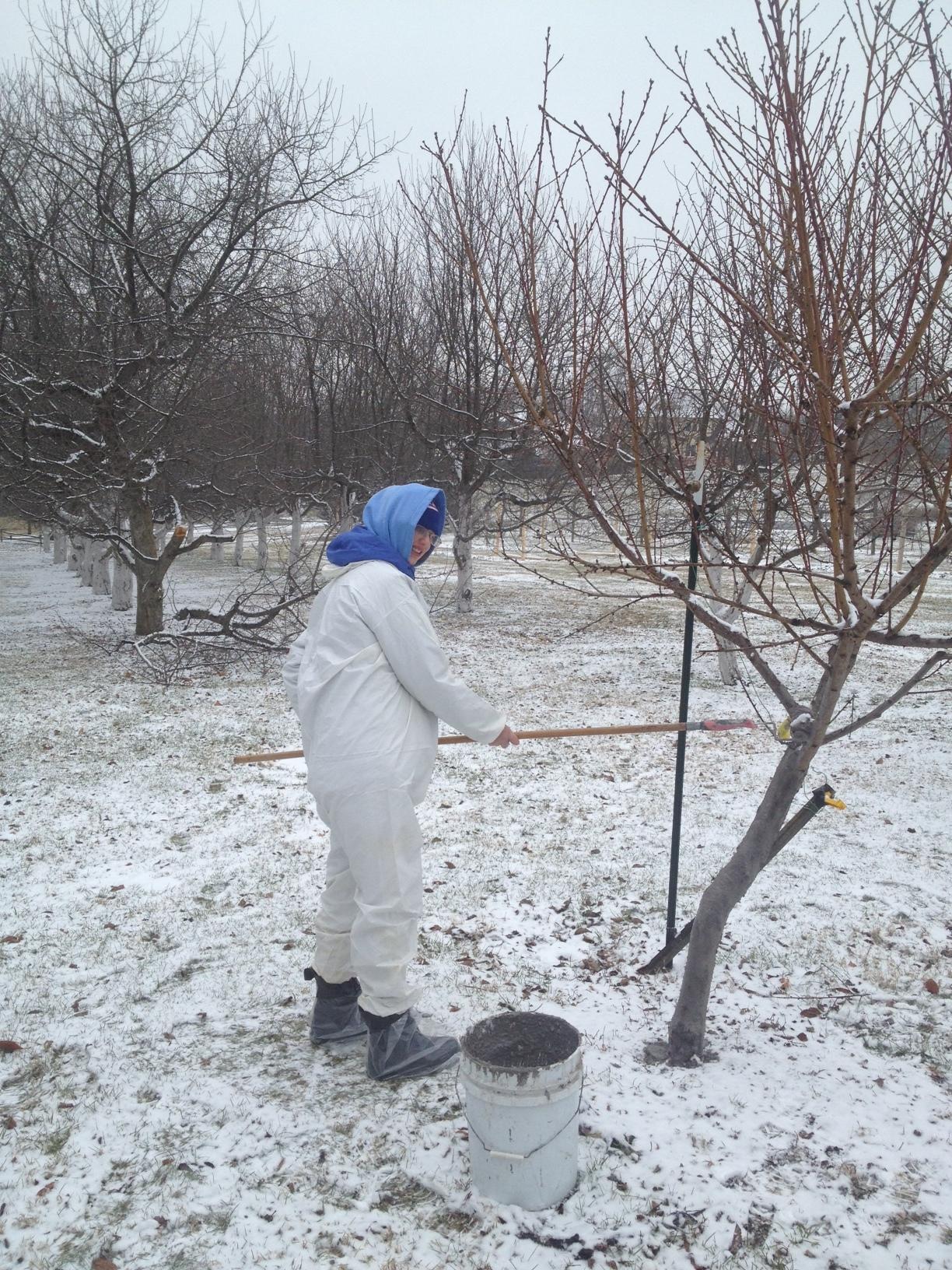 Sarah M painting trees.JPG
