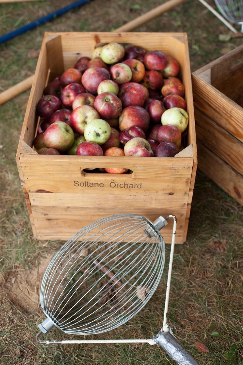 Soltane apple crate CS.jpg