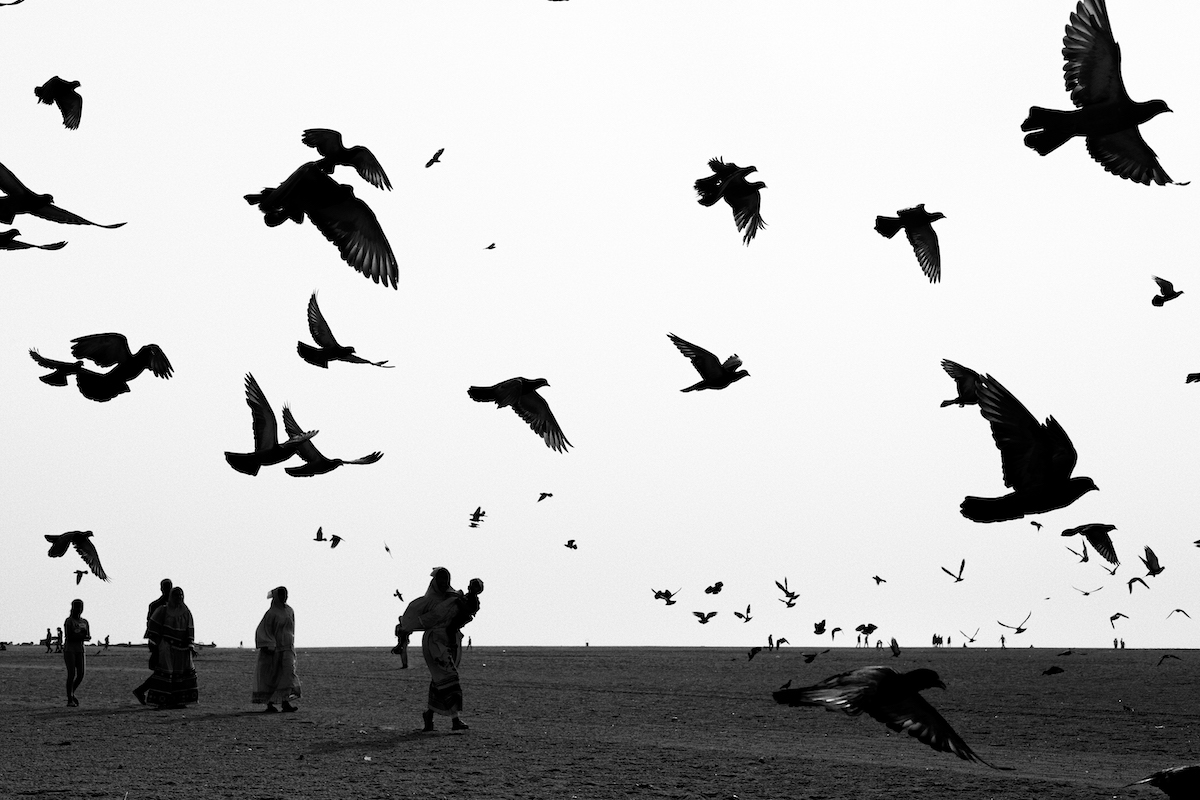 Flock of Pigeons at Marina Beach
