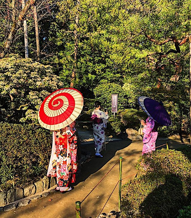 Paper parasols & kimonos in a Garden in Kyoto, Japan just before dusk.