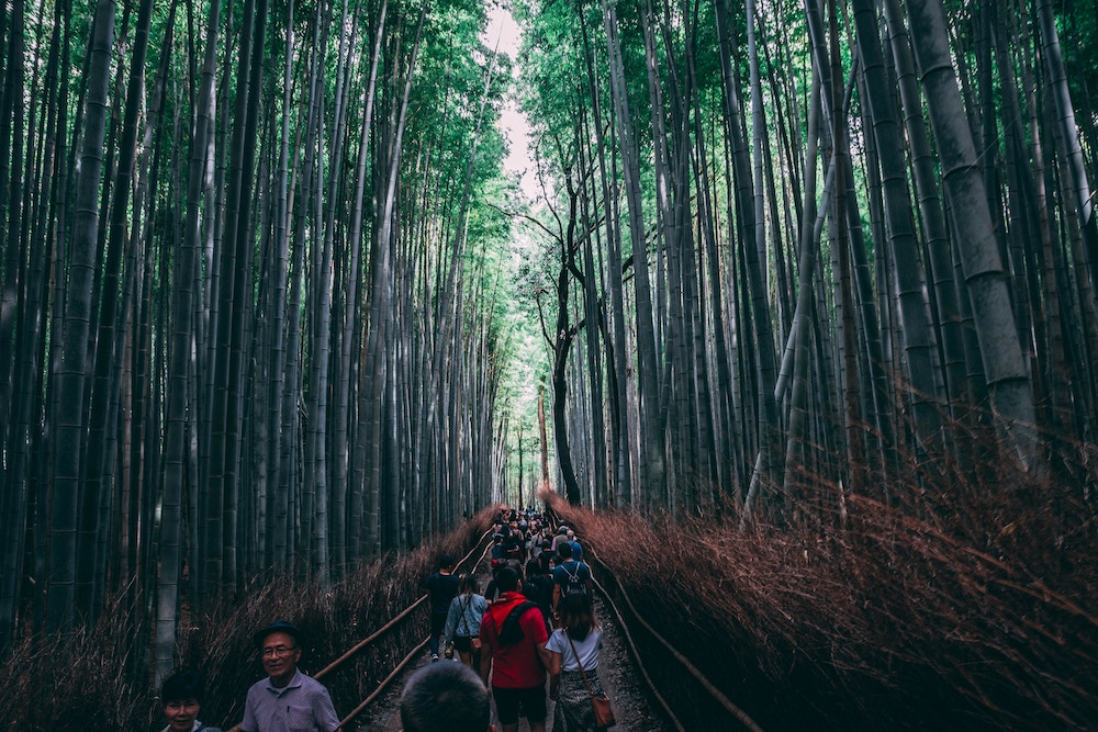 Bamboo Forest Kyoto.jpg