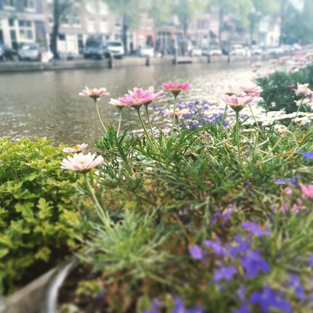 #canals #flowers