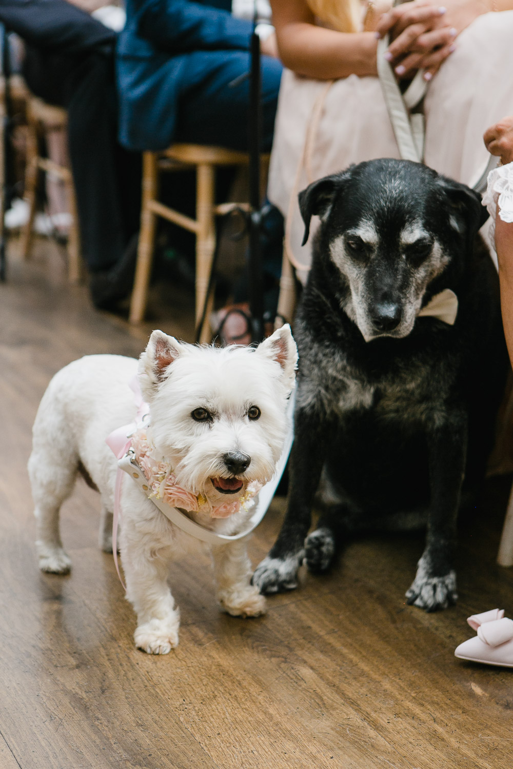 pet friendly wedding venue tankardstown ireland
