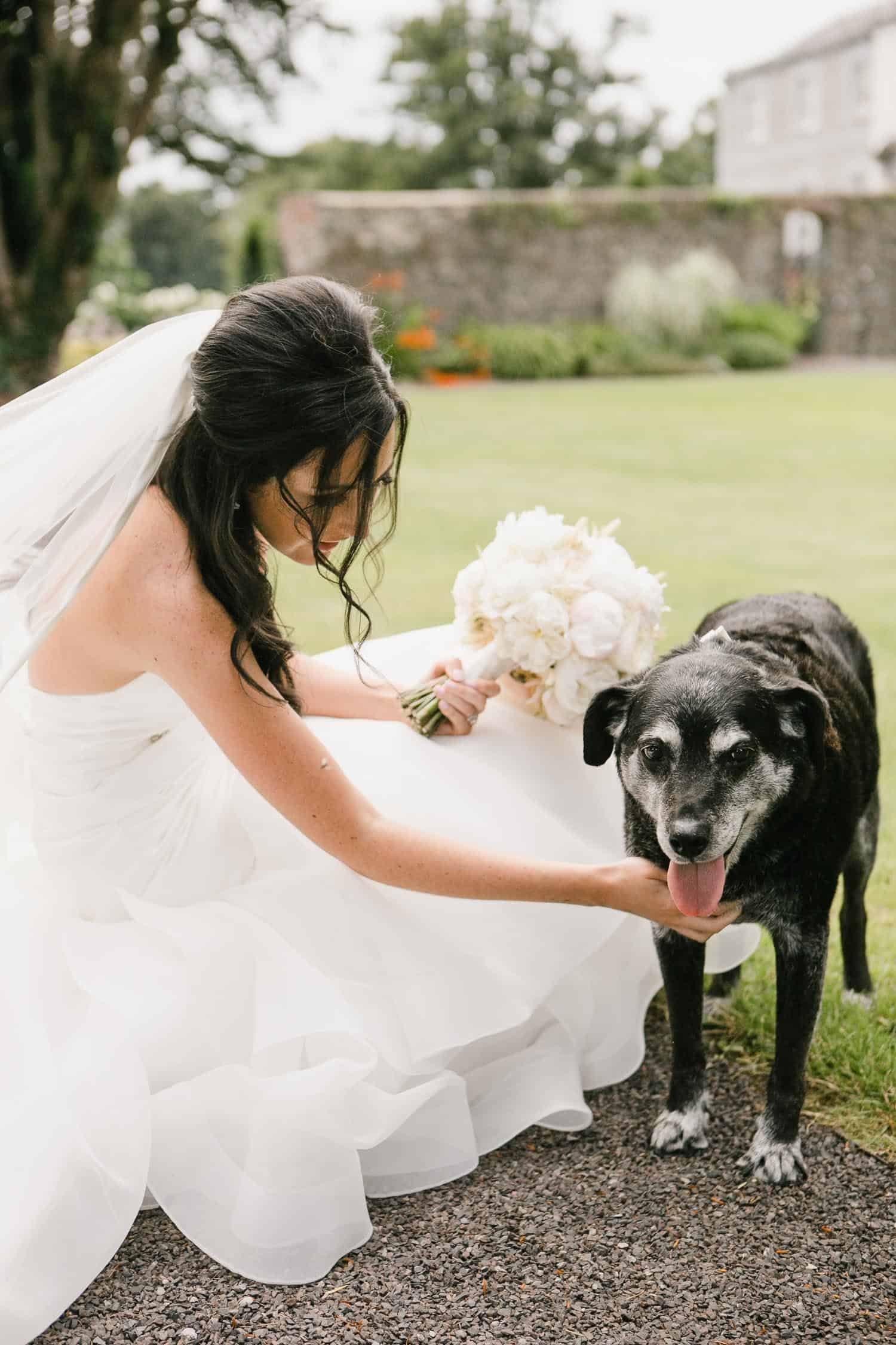 Bride With Her Pet Dog in Tankardstown House Walled Garden