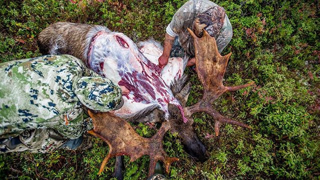 It may only be the end of June, but hunting season is right around the corner!  #struttinbuck #iamsportsman #hunterslife #hunting #huntingseason #moosehunting
