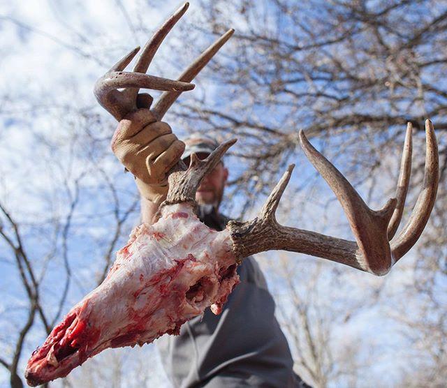 Freshly caped by @branhunt. #wearehunters #struttinbuck #hunterslife #iamsportsman #deer #hunter