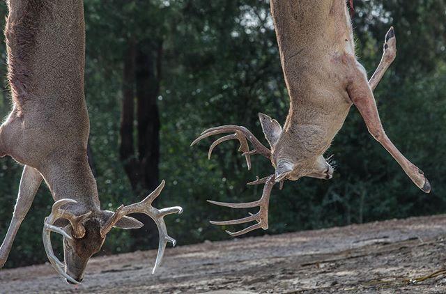 When you know it was a good day in the field!  #iamsportsman #struttinbuck #hunterslife #hunter #whitetail #buckdeer