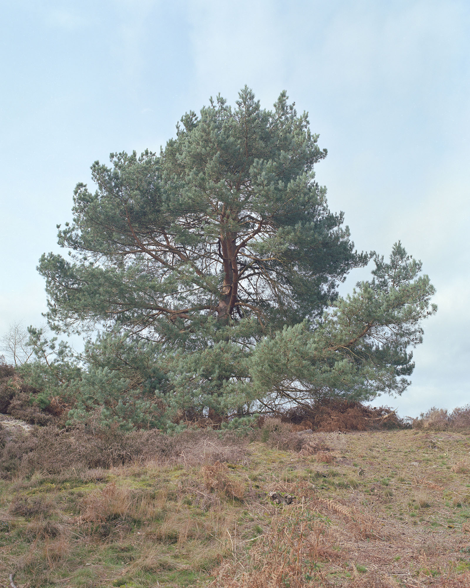 ln364_wonderland_bourne_woods_066.jpg