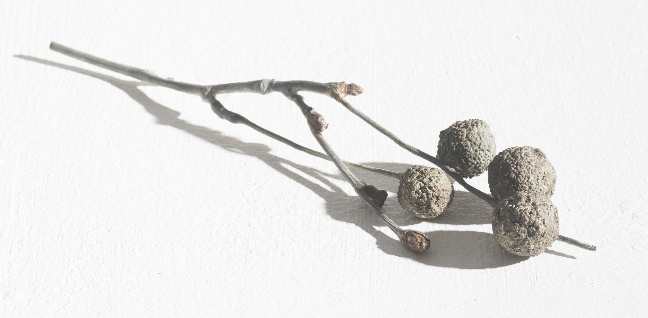 """Platanus Acerifolia 1"" (2017). Bronze, approx. 50 x 250 x 50mm."