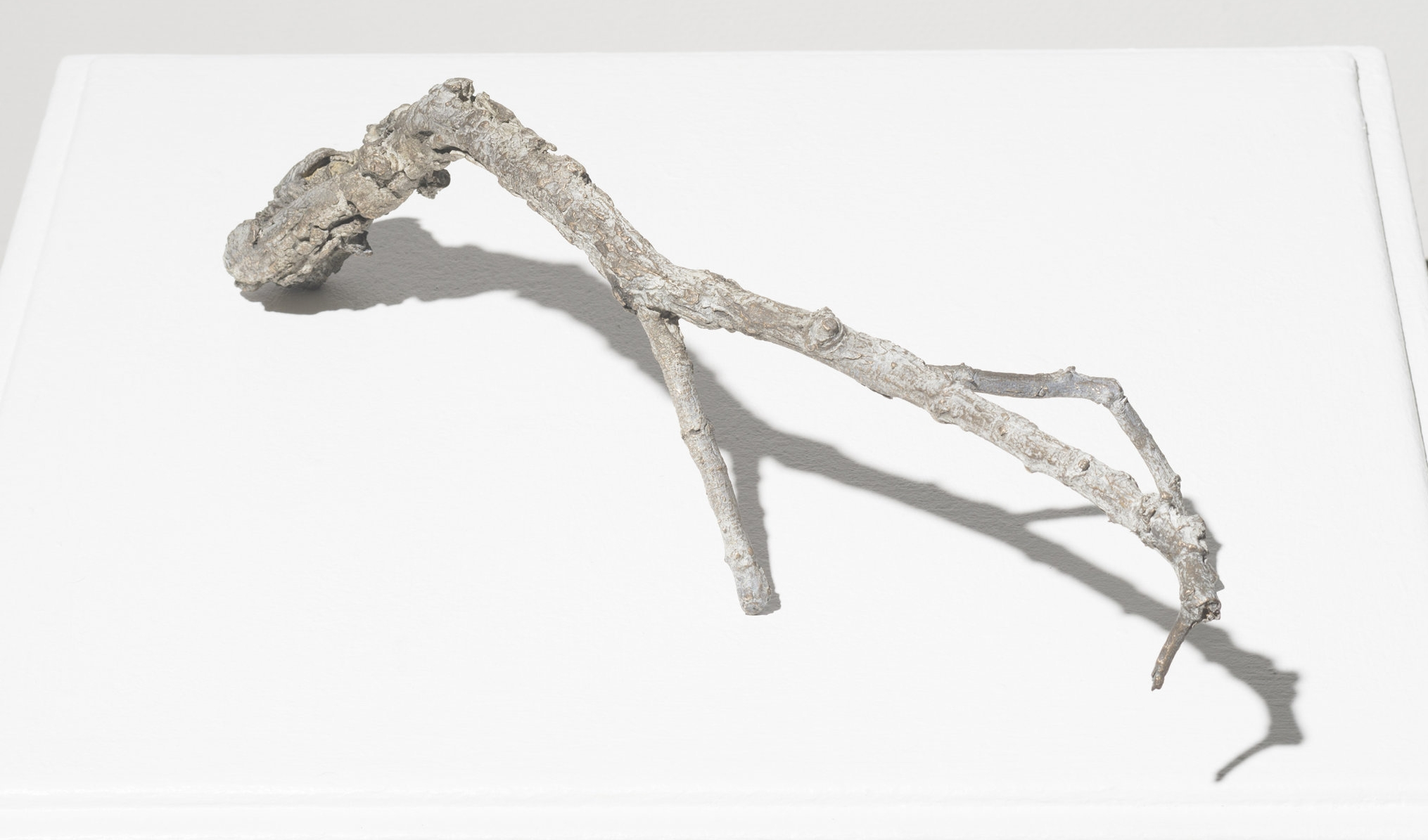 """Acacia Burkei"" (2017). Bronze, approx. 50 x 400 x 40mm."