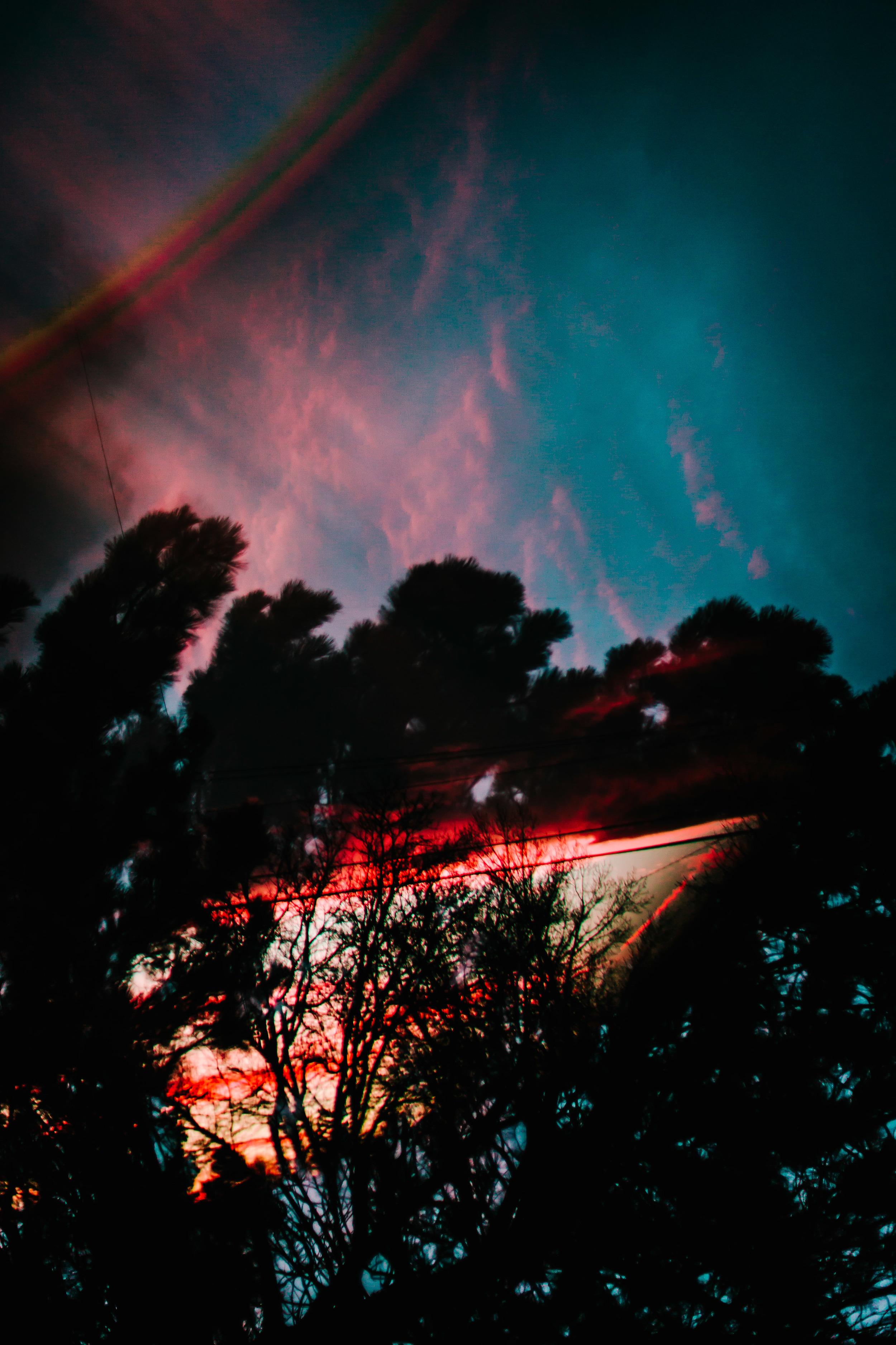 backyard experimentations-2.jpg