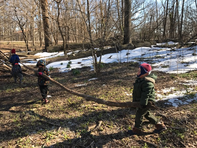 """When one friend can't carry a large branch, they usually ask ME to help. When I suggest asking another friend, this is what happens -TEAMWORK. """"Ask 3 and then ME"""" works every time!"""