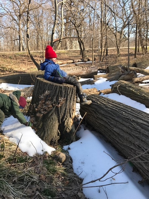 After a long hour of constructing a fort, you need a break! Tree stumps offer just the place to relax.