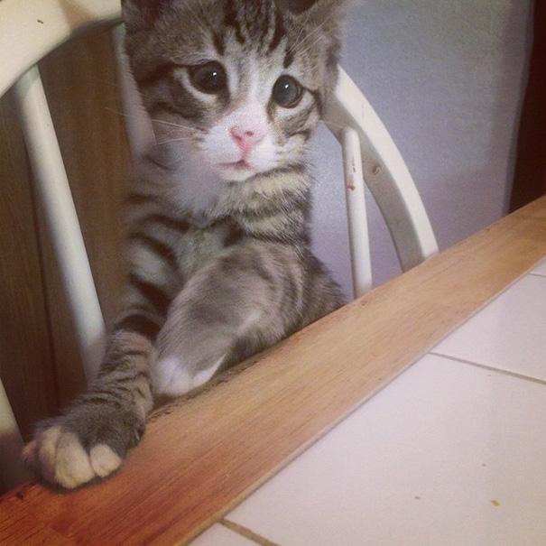 bum-cat-worried-eyes-10.jpg