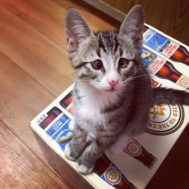 bum-cat-worried-eyes-9.jpg