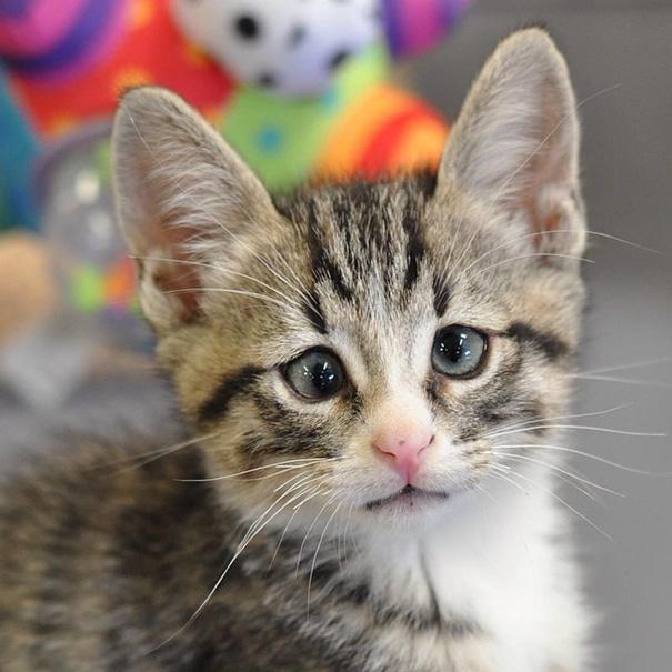 bum-cat-worried-eyes-4.jpg