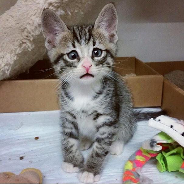 bum-cat-worried-eyes-26.jpg