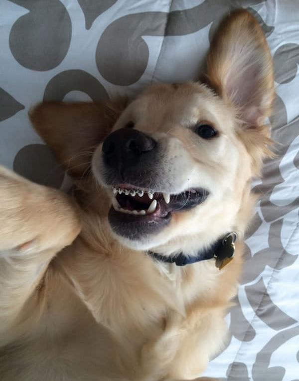 Inzwischen scheint der kleine Wesley sogar richtig stolz auf seine Zahnspange zu sein. Er kann wieder fressen und ist wieder ein ganz normaler Hund, ...