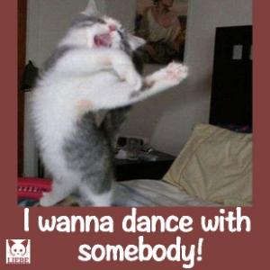 --Meme-katze-dance.jpg