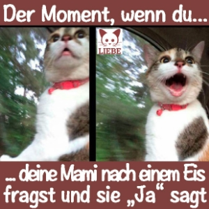 -Meme-katze-eis.jpg