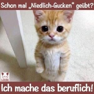 --Meme-katze-gucken.jpg