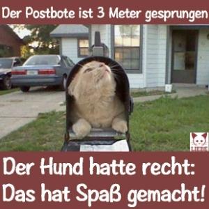 -Meme-katze-postbote.jpg