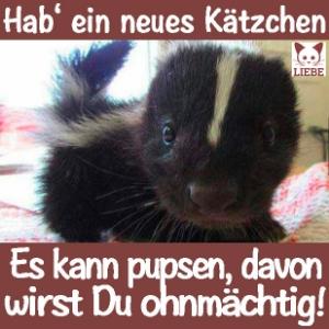 -Meme-katze-pups.jpg