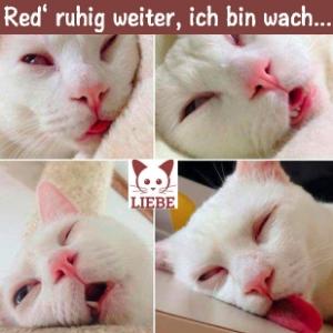 --Meme-katze-wach.jpg