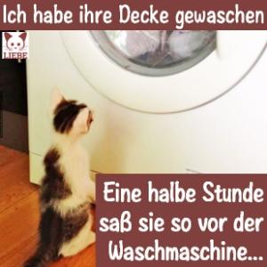 --Meme-katze-waschmaschine.jpg