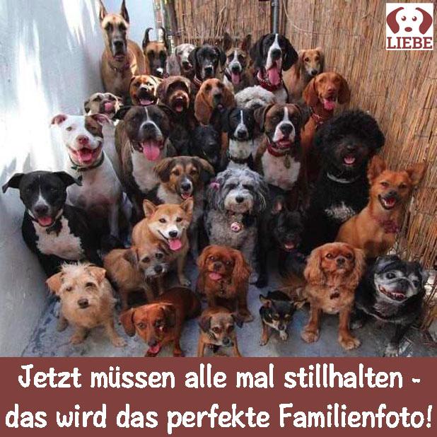 -Meme-hund-familienfoto.jpg