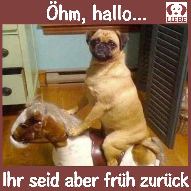 --Meme-hund-fruehzurueck.jpg
