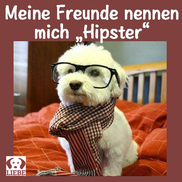 --Meme-hund-hipster.jpg