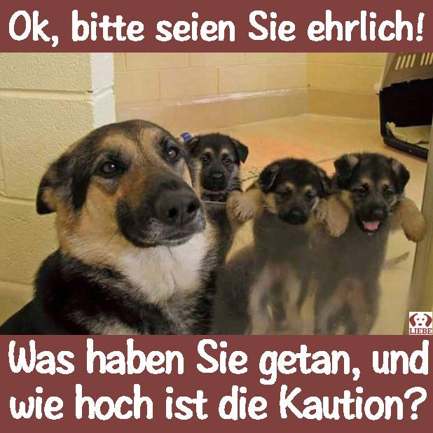 --Meme-hund-Kaution.jpg