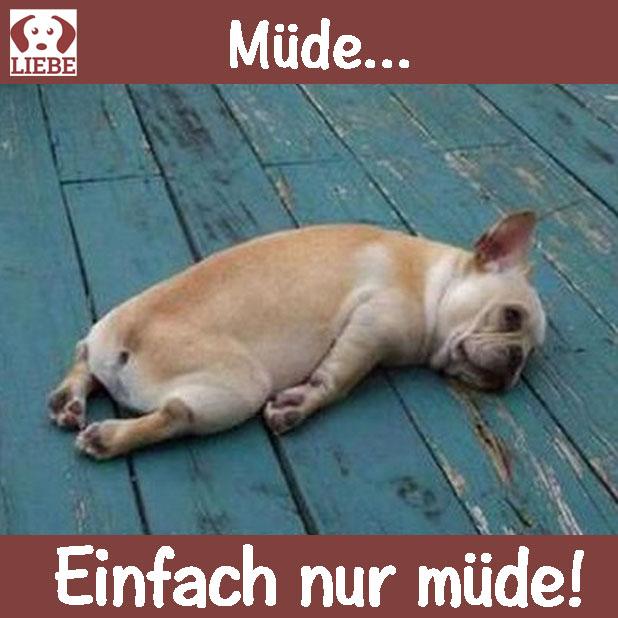 --Meme-hund-muede.jpg