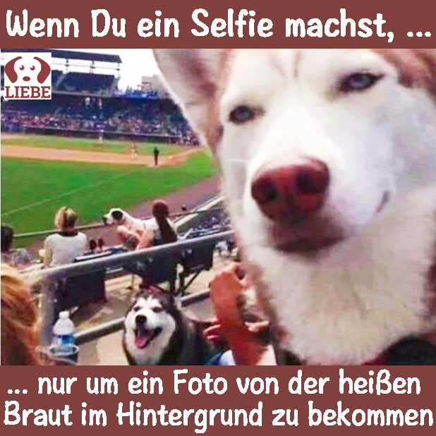 -Meme-hund-selfie.jpg