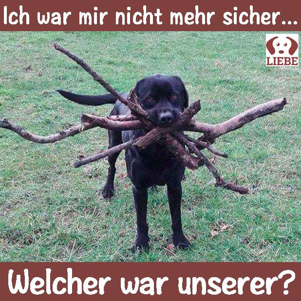 -Meme-hund-stock.jpg