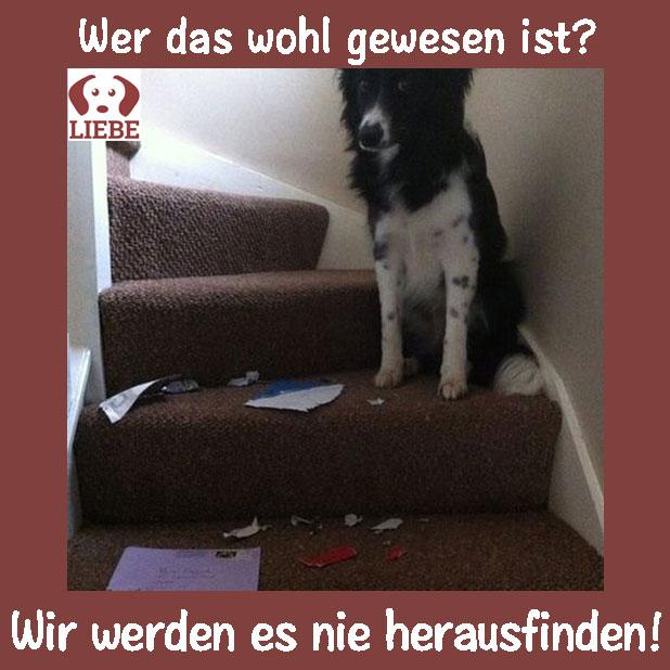 --Meme-hund-treppe.jpg