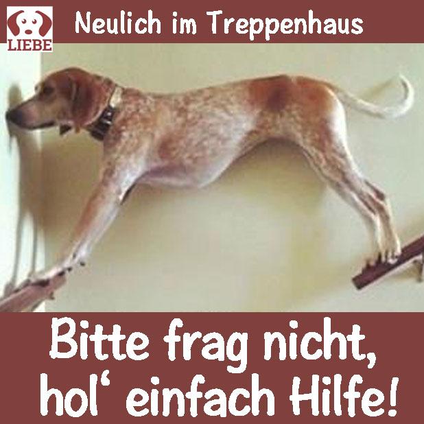 --Meme-hund-treppenhaus.jpg