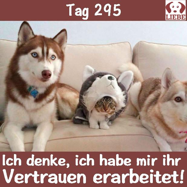 -Meme-hund-vertrauen.jpg