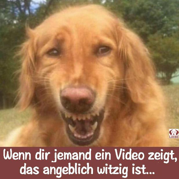 --Meme-hund-video-zeigt.jpg