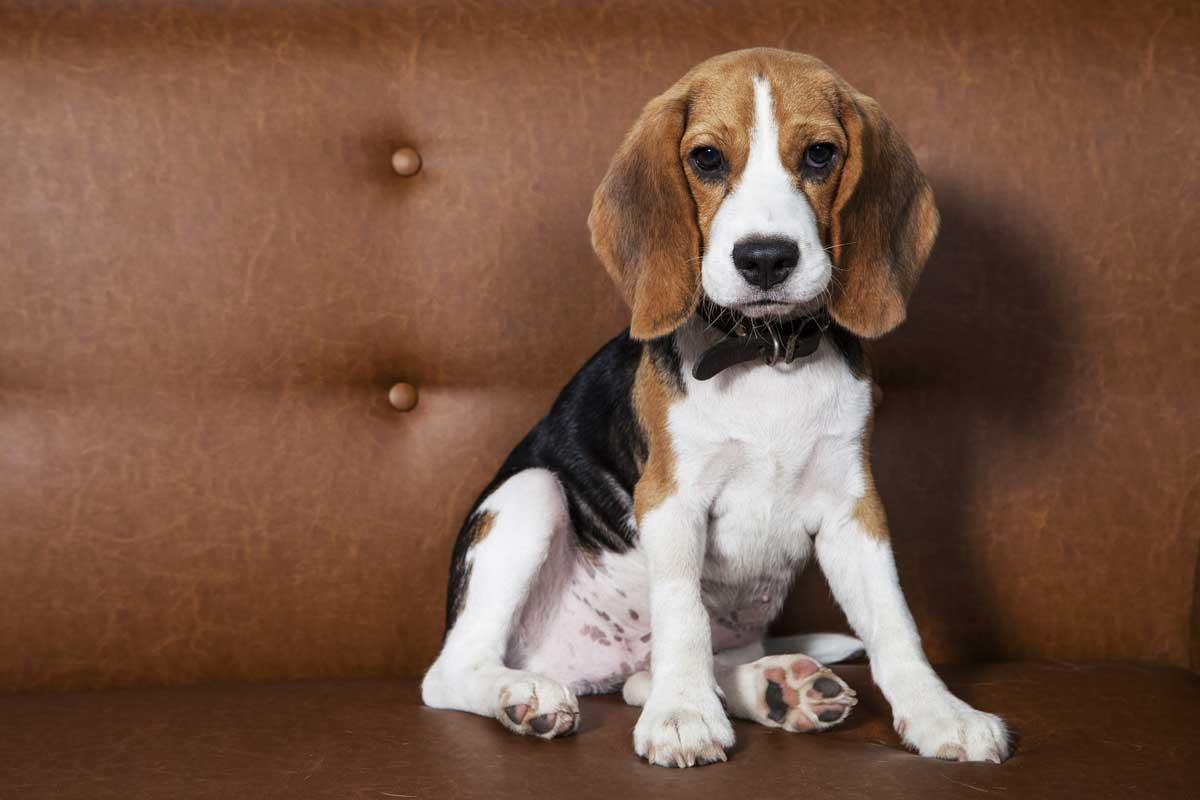 Die beliebtesten Hundenamen 2017 ©iStock