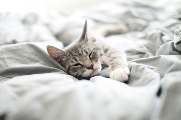 Mit Katze im Bett ist es einfach herrlich kuschelig. © iStock