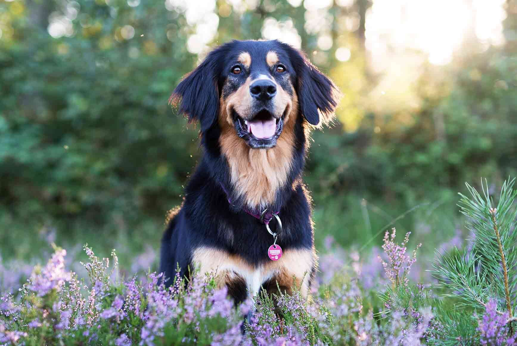 Beliebtesten Hundenamen