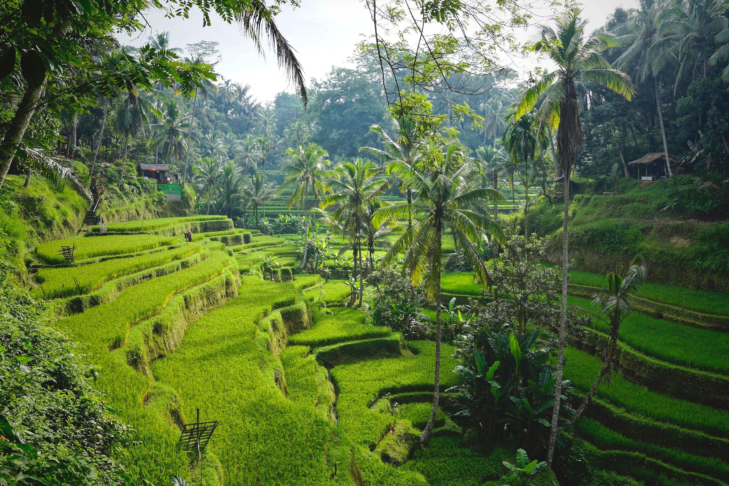 BALI - TRAVEL FOR A PURPOSE