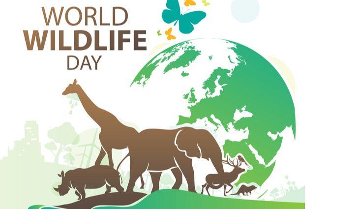 world wildlife day 4.jpg