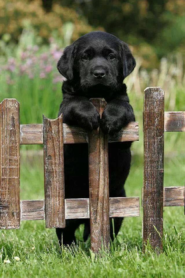 National Puppy Day.jpg