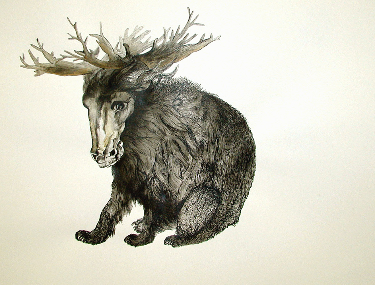 Horsebear.jpg