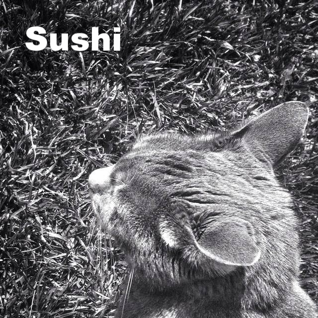 sushi in grass.jpg